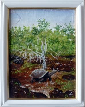 galapagosschildkröte